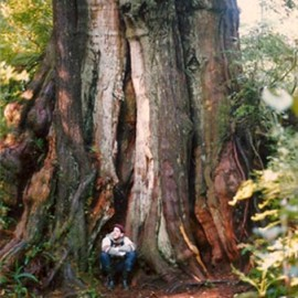 The Giant Tree that Called to Me